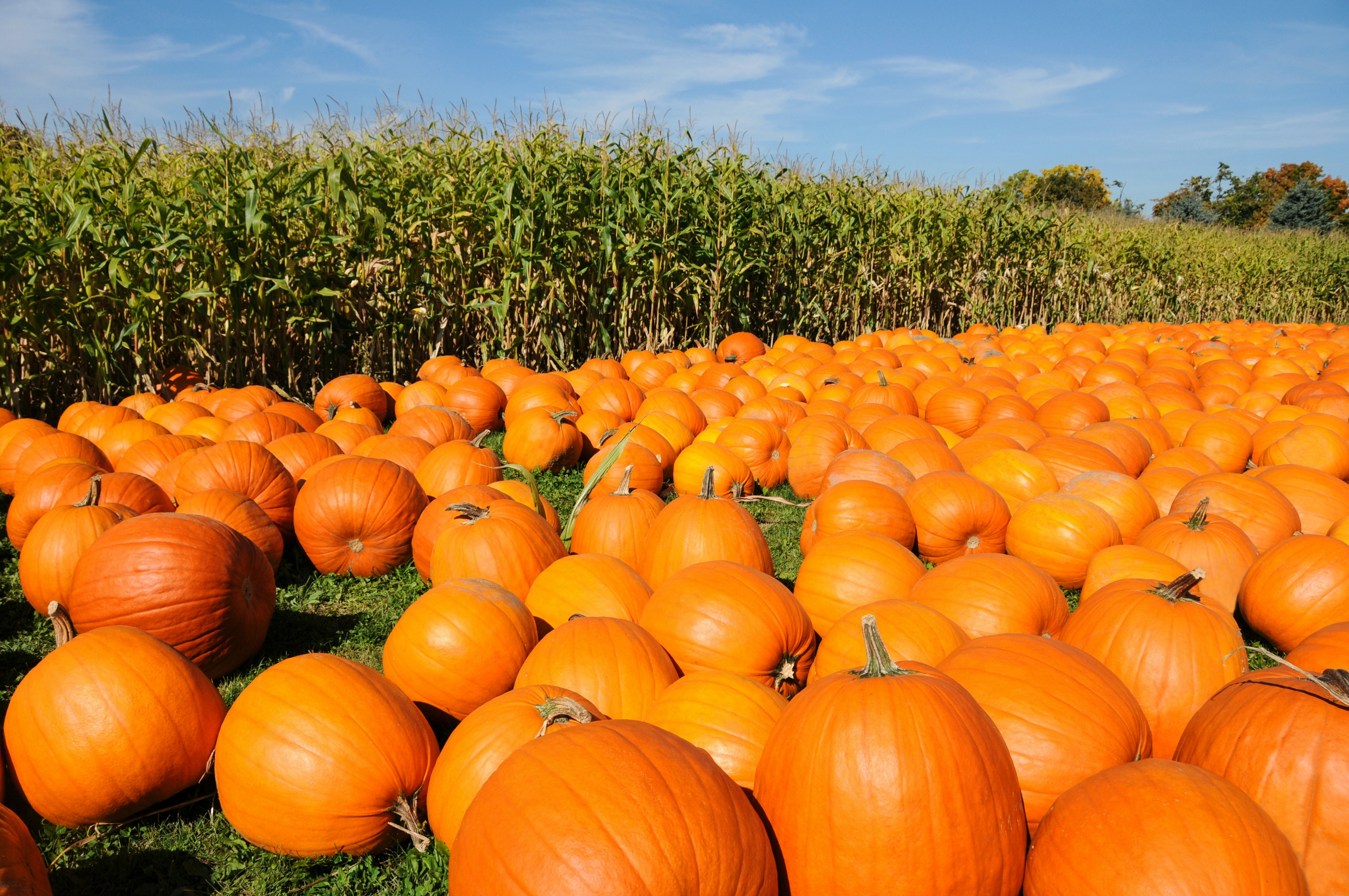 Popular Pittsburgh's Guide to Pumpkin Patches, Corn Mazes, and Fall Festivities
